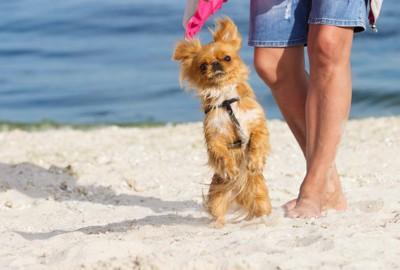 散歩中に立ち上がる犬