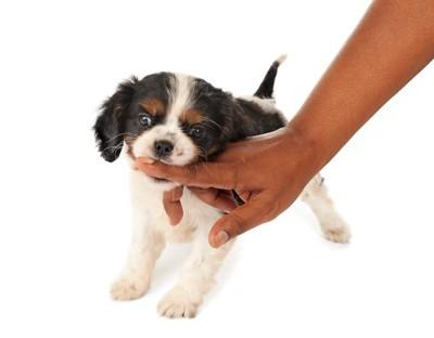 飼い主の指を噛んでいる子犬