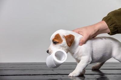 トイレットペーパーを咥える犬