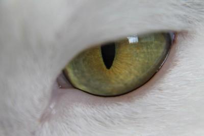 瞳孔が縦に開いている目のアップ