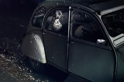 車の中にいるダルメシアン