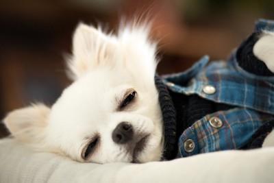 横になって目をつぶる犬