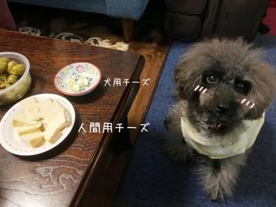 犬用チーズとエマさん