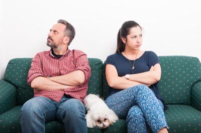喧嘩中のカップルの間に座る白い犬