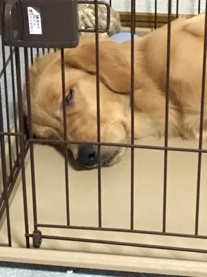 愛犬の寝顔写真19枚目