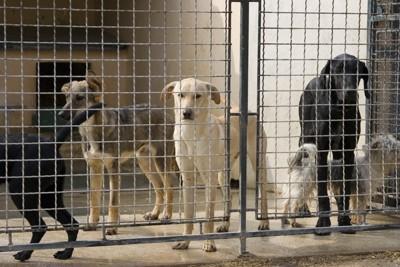 檻の中の犬達