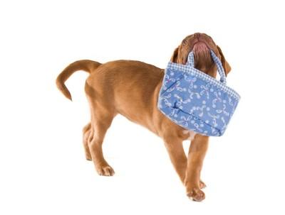 バッグを咥える犬