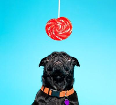 赤い飴と犬