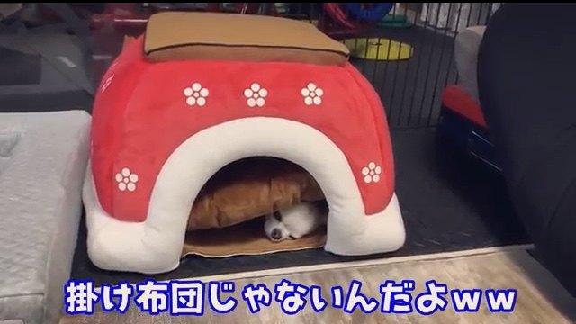 犬は狭い所が好き