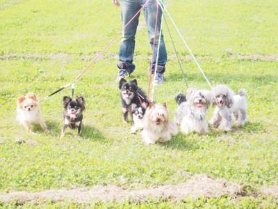 たくさんの犬を連れている写真