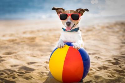 砂浜でボールで遊ぶ犬