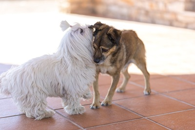 寄り添い合う白い犬と茶色い犬
