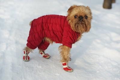 雪の上を歩くコートを着て靴を履いた犬