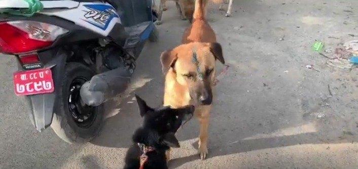 マロと野良犬