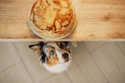テーブルのパンケーキを見つめる犬
