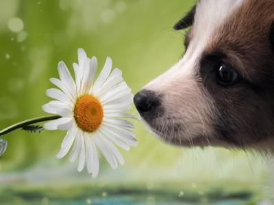 花を前にした犬