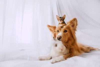 うさぎと犬と猫