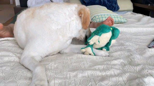 カエルと遊ぶ犬