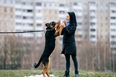 立って挨拶する犬
