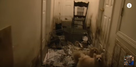 廊下に監禁された犬