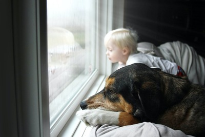 窓の外を見る犬と子供