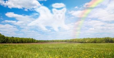 虹の橋と犬型の雲