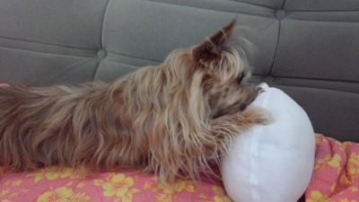 おもちゃにじゃれる犬