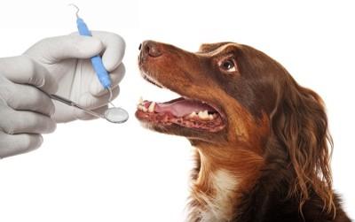スケーラーと鏡を持つ手と口を開けて見上げる犬