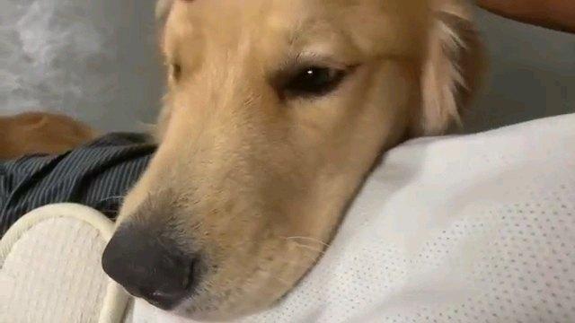 人のお腹に顔を乗せる犬