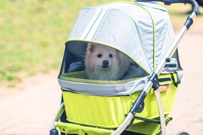 ペットカードに乗る犬