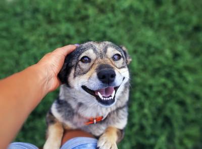 飼い主の足に前足をかけて立つ犬