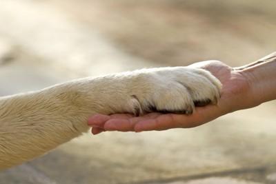 手をつなぐ人間と犬