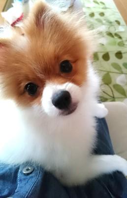 カメラ目線の犬