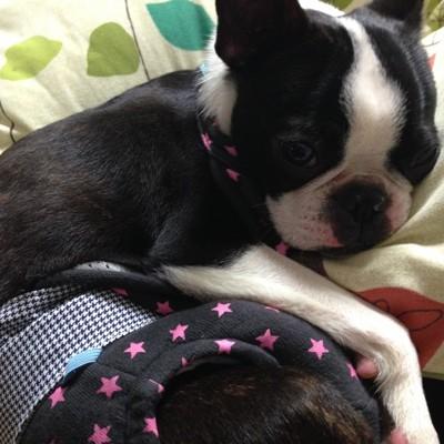 悲しそうな顔の犬