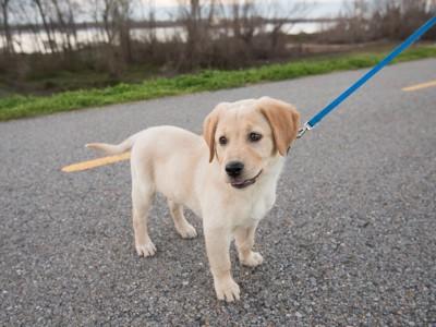 散歩中の子犬