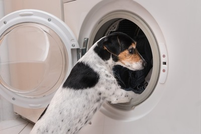 洗濯機を覗く犬