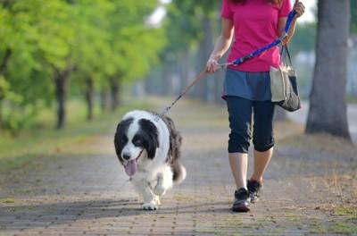 ピンク色の服の女性と散歩する犬