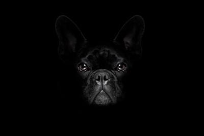 暗闇に潜む犬