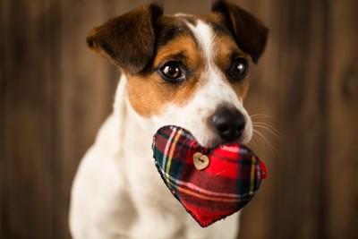 ハートのおもちゃを咥えた犬