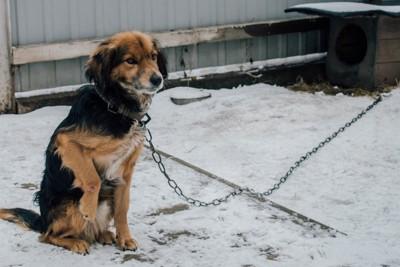 雪の中につながれた犬