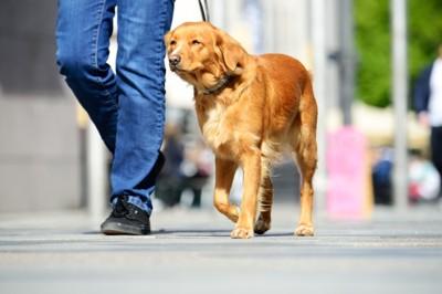 アスファルトを散歩する犬