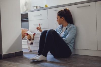 座る女性に叱られている犬