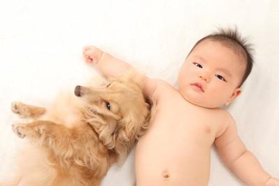 そばで過ごすダックスフンドと赤ちゃん