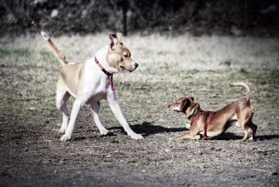 興奮する犬達