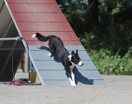 青と赤の板から犬が下ってくる写真