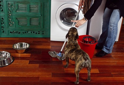 掃除する女性と犬