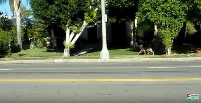 道路脇を歩く犬