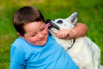 男の子の顔を舐めている白い犬