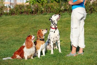 トレーニング中の3頭の犬