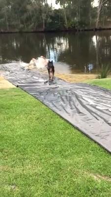 池に落ちる男性